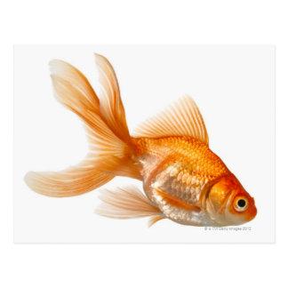 Extravaganter Goldfish Postkarte