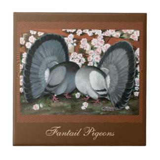 Fantail-Tauben gepaart Kleine Quadratische Fliese