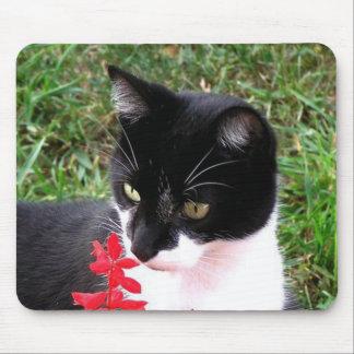 Fantastische Tuxedo-Katze im Garten Mousepads