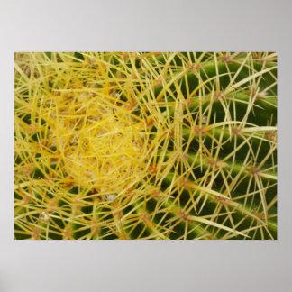 Fass-Kaktus-Nahaufnahme-Natur-Muster-Foto Poster
