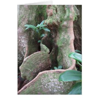 Feigenbaum-Wurzeln Grußkarte
