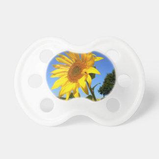 Feld der Sonnenblumen, Sonnenblume Baby Schnuller