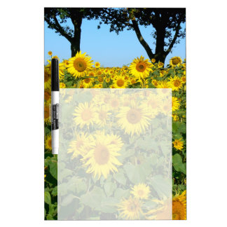 Feld der Sonnenblumen, Sonnenblume Trockenlöschtafel