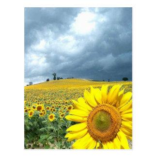 Feld des Gelbs Postkarte