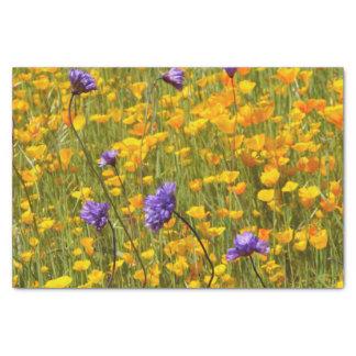 Feld des Mohnblumen-und Seidenpapier