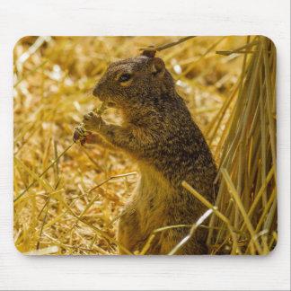 Felsen-Eichhörnchen-Essen Mousepads
