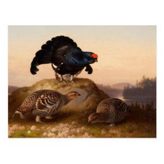 Ferdinand von Wright Blackgrouses CC0822 Postkarte