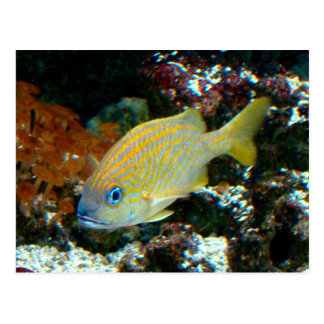 Fische 2 Postkarte