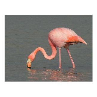 Flamingogrußkarte Postkarte