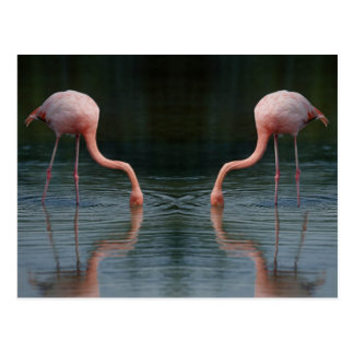 Flamingos Postkarte