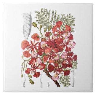 Flammen-Baum (Delonix regia) Keramikfliese