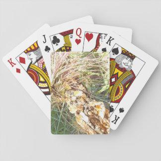 Flechten-und Luft-Pflanzen-Spielkarten Pokerkarte
