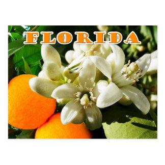 Florida-Staats-Blume: Die orange Blüte Postkarte