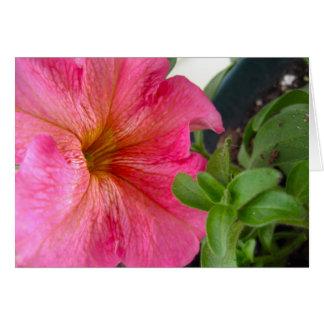 Flowerpot 4 karte