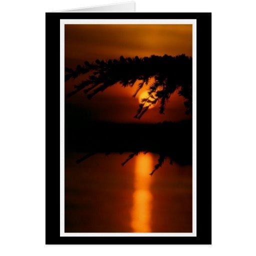 Föhre mit Sonnenuntergang Karte