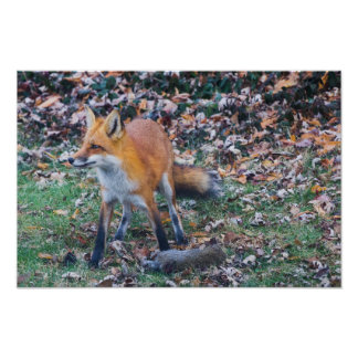 Fox und seine Tötung Poster