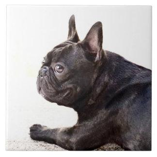Französische Bulldogge Fliese