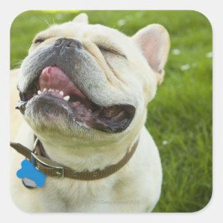 Französische Bulldogge Quadrat-Aufkleber