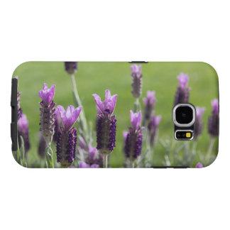 Französischer Lavendel-Telefon-Kasten