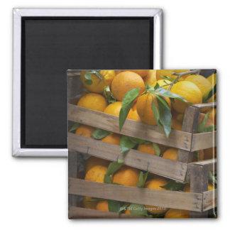 frisch ausgewählte Orangen Magnets