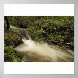 frische Quellwasser im Schwarzwald Poster