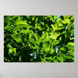 frisches Frühlingsgrün-Blätter. Naturphotographie Poster