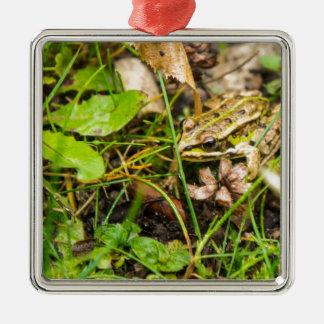 Frosch im Gras Silbernes Ornament