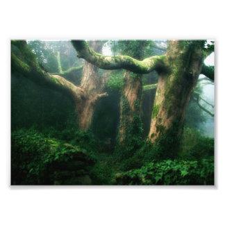 Fruchtbarer Wald Photos
