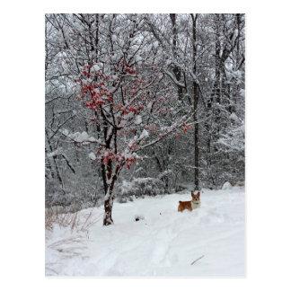 Früher Schnee: Corgi-Postkarte Postkarte