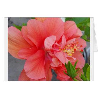 Frühling Blumennotecard Mitteilungskarte