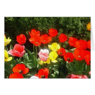 Frühling Grußkarte