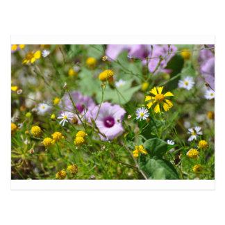Frühlings-Blumen Postkarten
