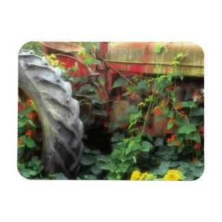Frühlings-Blumen schmücken einen alten Traktor Vinyl Magnet