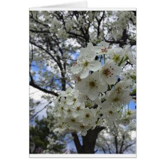 Frühlings-Blüte Karte
