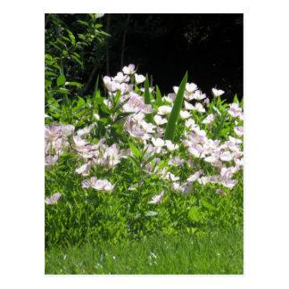 Frühlings-Blüten-Weiß des Kirschenvn718 Hügel-NJ Postkarte