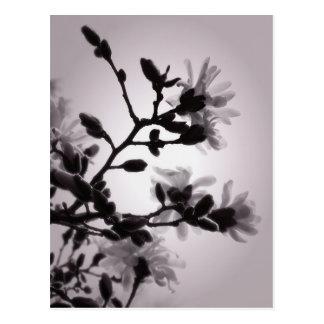Frühlings-Magnolie Postkarte