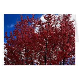 Frühlings-Rosa Grußkarte