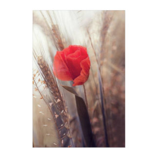 Frühlings-rote Mohnblumen-böhmische Acryldruck