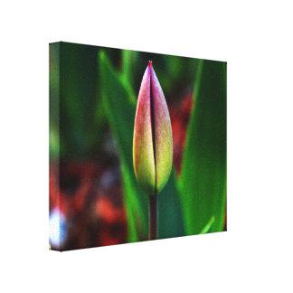 Frühlings-Stolz-Leinwand Gespannter Galeriedruck