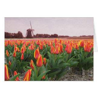 Frühlings-Tulpe-Zeit-Blumen-Feld und Windmühle Karte