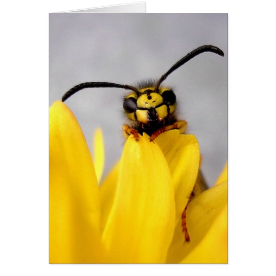 Funny Wasp Greeting Card Karte