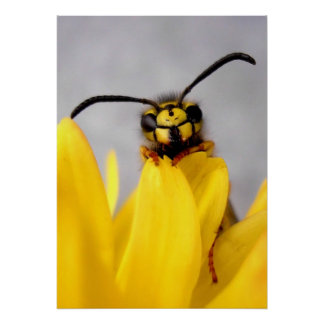 Funny Wasp Posters Poster