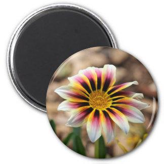 Für die Liebe der Farbe - Kaleidoskop Runder Magnet 5,7 Cm