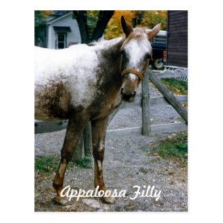 """""""Gänseblümchen"""" Appaloosa-Stutenfohlen Postkarte"""