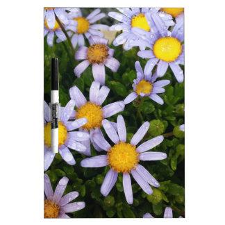 Gänseblümchen-Blumen, weiße gelbe Blume, Memo Board