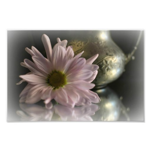 Gänseblümchen u. Krug reflektiert Fotos