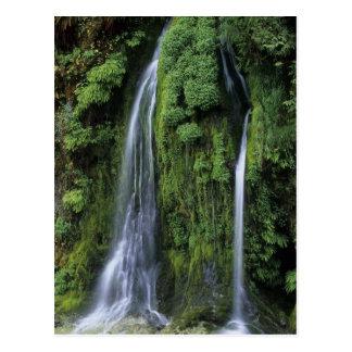 Garten Eden-Postkarte Postkarte