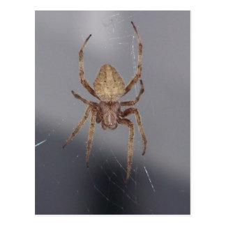 Garten-Kugel-Weber-Spinne Postkarte