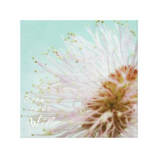Geboren, wild zu sein. Mimose Pudica oder Touch Leinwanddruck