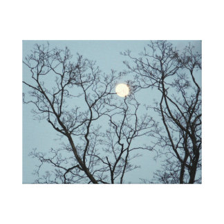 Gefangen in den Bäumen Leinwanddruck